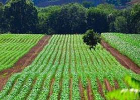 کاهش ارزبری 200 میلیون دلاری با استفاده گسترده کودهای زیستی