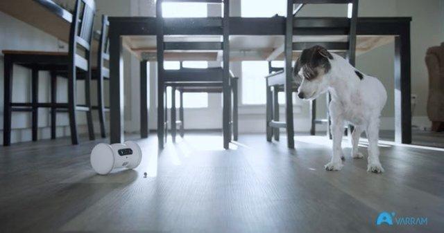 وارام؛ رباتی برای پر کردن تنهایی حیوانات خانگی
