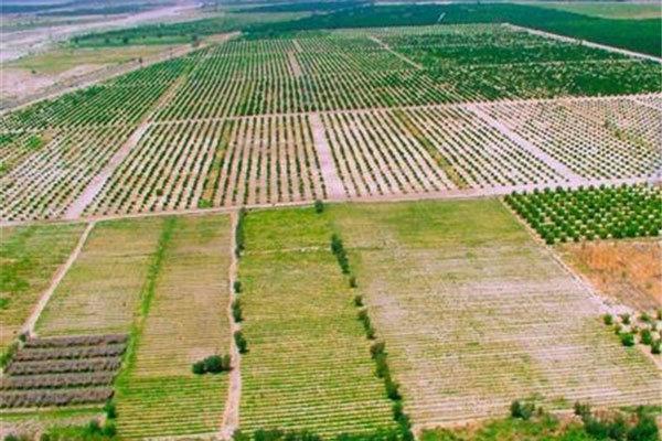 اجرای طرح کاداستر در 450 هزار هکتار اراضی کشاورزی استان بوشهر
