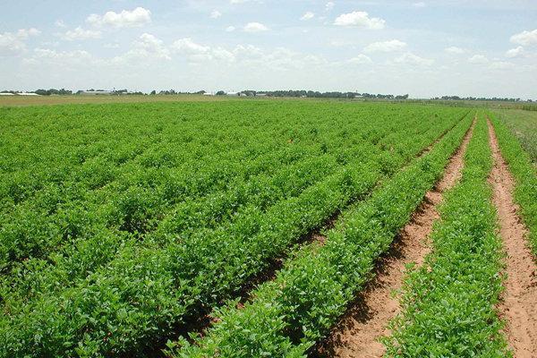 توصیه های هواشناسی کشاورزی برای روزهای پایانی پاییز