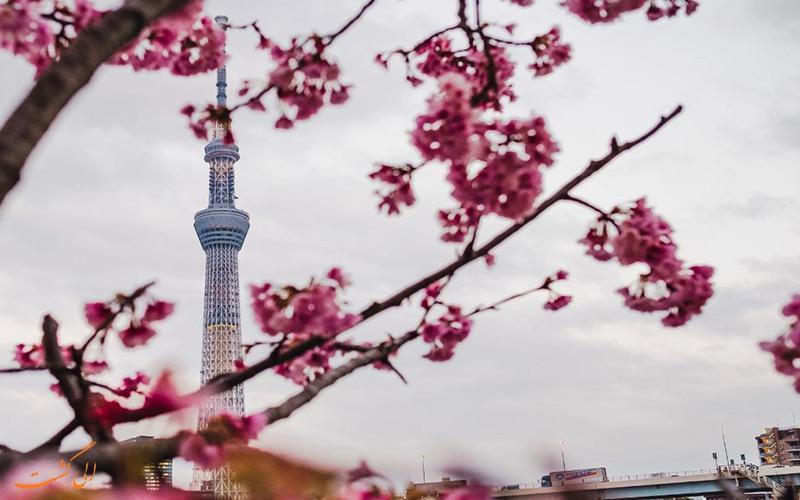 13 مورد از دیدنی های شهر توکیو