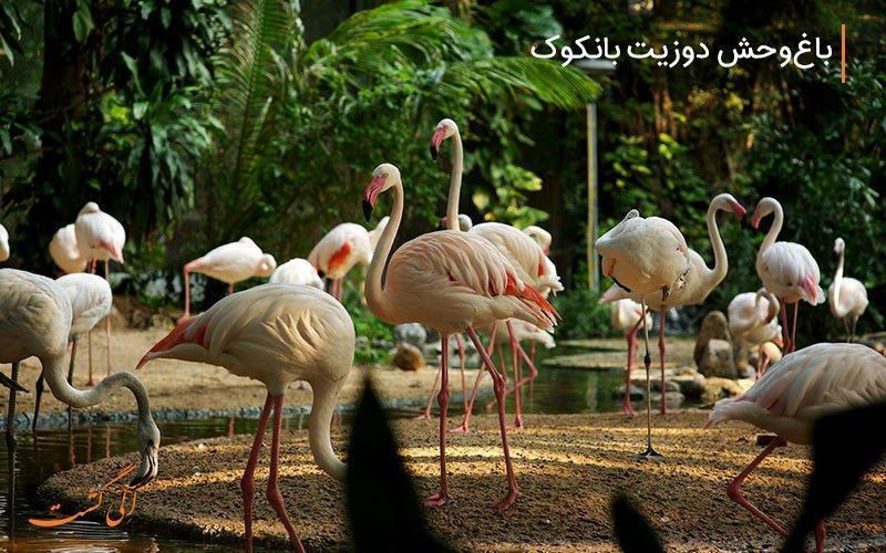 بیشترین تنوع جانوری را در باغ وحش دوزیت بانکوک ببینید!
