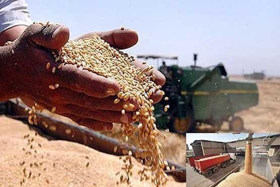 پرونده خرید تضمینی گندم در کرمانشاه بسته شد